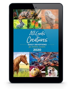 All God's Creatures - 2020 eBook