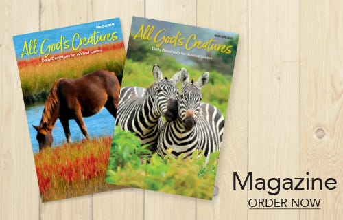 All God's Creatures Magazine